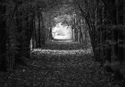 Il bosco delle viole